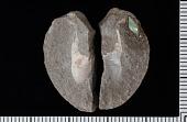 view Axius reticulatus Rathbun digital asset number 1