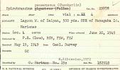 view Spirobranchus paumotanus (Chamberlin, 1919) digital asset number 1