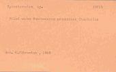 view Pomatoceros paumotanus Chamberlin, 1919 digital asset number 1