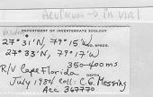 view Ophiomusium acuferum Lyman, 1875 digital asset number 1