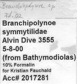view Branchipolynoe sp. digital asset number 1