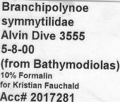view Branchipolynoe symmytilida Pettibone, 1984 digital asset number 1