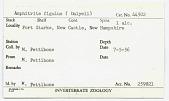 view Amphitrite figulus (Dalyell, 1853) digital asset number 1
