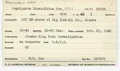 view Amphiporus bimaculatus Coe, 1901 digital asset number 1