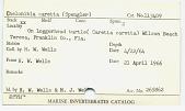 view Chelonibia caretta (Spengler) digital asset number 1