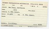 view Balanus tintinnabulum californicus Pilsbry digital asset number 1