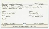 view Balanus venustus obscurus Darwin digital asset number 1