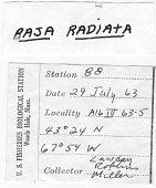 view Raja radiata digital asset number 1