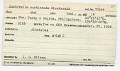 view Euchirella curticauda Giesbrecht, 1888 digital asset number 1