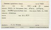 view Phaenna spinifera Claus, 1863 digital asset number 1
