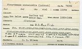 view Monstrilla leucopis Sars, 1921 digital asset number 1