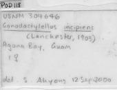 view Gonodactylellus incipiens (Lanchester, 1903) digital asset number 1
