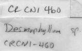 view Crispatotrochus rubescens (Moseley, 1881) digital asset number 1