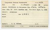 view Corycaeus flaccus Giesbrecht, 1891 digital asset number 1