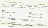 view Lichomolgus sensilis Humes, 1964 digital asset number 1
