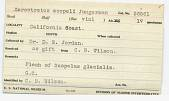 view Sarcotretes scopeli Jungersen, 1911 digital asset number 1