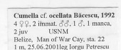 view Cumella ocellata Bacescu, 1992 digital asset number 1