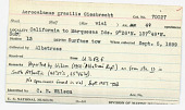 view Acrocalanus gracilis Giesbrecht, 1888 digital asset number 1