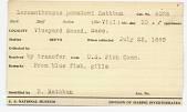 view Lernanthropus pomatomi Rathbun, 1887 digital asset number 1