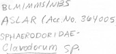view Clavodorum sp. digital asset number 1