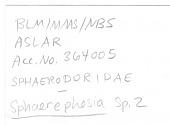 view Sphaerodoropsis corrugata Hartman & Fauchald, 1971 digital asset number 1