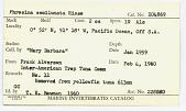view Phrosina semilunata Risso, 1822 digital asset number 1
