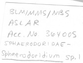 view Sphaerodoridium sp. digital asset number 1