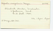 view Caprella irregularis Mayer, 1890 digital asset number 1