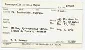 view Paracaprella pusilla Mayer, 1890 digital asset number 1
