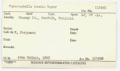 view Paracaprella tenuis Mayer, 1903 digital asset number 1