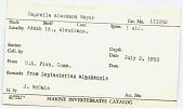 view Caprella alaskana Mayer, 1903 digital asset number 1