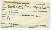 view Caecidotea stygia Packard, 1871 digital asset number 1