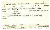 view Lironeca vulgaris Stimpson, 1875 digital asset number 1