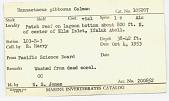 view Nannastacus gibbosus Calman digital asset number 1