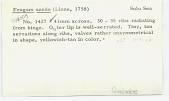 view Fragum unedo (Linneaus, 1758) digital asset number 1