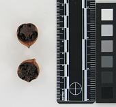 view Nut Halves digital asset number 1