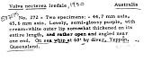 view Volva necterea Iredale, 1930 digital asset number 1