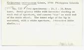 view Calpurnus verrucosus Linneaus, 1758 digital asset number 1