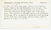 view Primovula striatula Sowerby, 1828 digital asset number 1