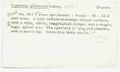 view Cyphoma gibbosum (Linneaus, 1758) digital asset number 1