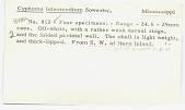view Cyphoma intermedium (Sowerby, 1828) digital asset number 1