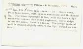 view Cyphoma signatum Pilsbry & McGinty, 1939 digital asset number 1
