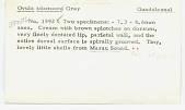 view Ovula adamsoni Gray digital asset number 1