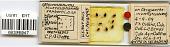 view Macrosiphum sanborni Gillette, 1908 digital asset number 1