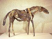 view Horse digital asset number 1