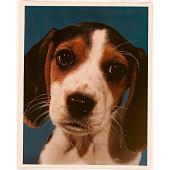 view American Pet digital asset number 1