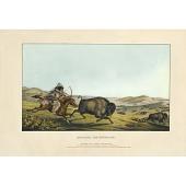 "view ""Hunting the Buffaloe"" digital asset number 1"