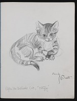 thumbnail image for A little book of cats and commando