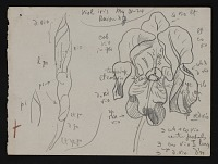 thumbnail image for Sketch of violet iris