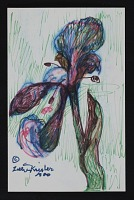 thumbnail image for Mail art drawing of an iris